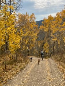 Stacy Gold mountain biking through golden aspen trees with her two dogs